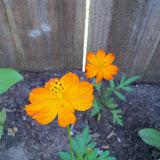 Gardening 2012 - 115_1550.JPG