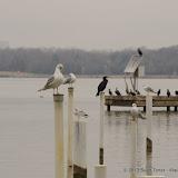 01-26-13 White Rock Lake - IMGP4368.JPG