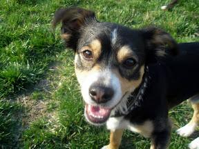 the adorable dog
