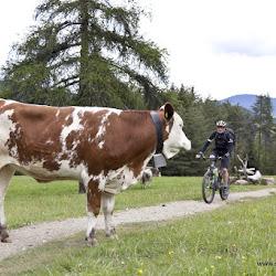 Hofer Alpl Tour 17.05.16-5126.jpg