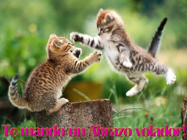 Postales gatitos tiernos y lindos