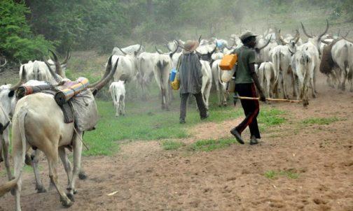 LATEST; Herdsmen Kill 5 In Edo State
