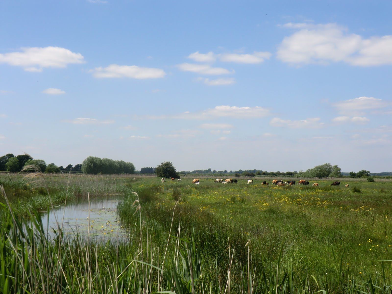 CIMG1717 Marshland near Small Hythe