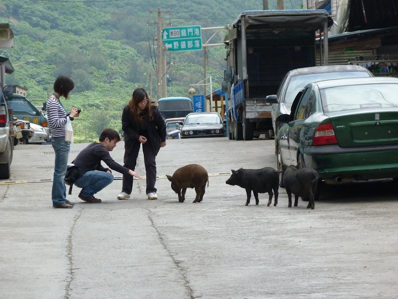 TAIWAN Ile de Lanyu - P1010548.JPG