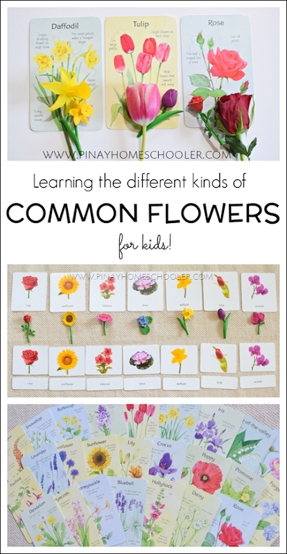 Hands-On Learning on Common Flowers