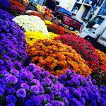 Farmer's Market - 2015 - CJO.jpg