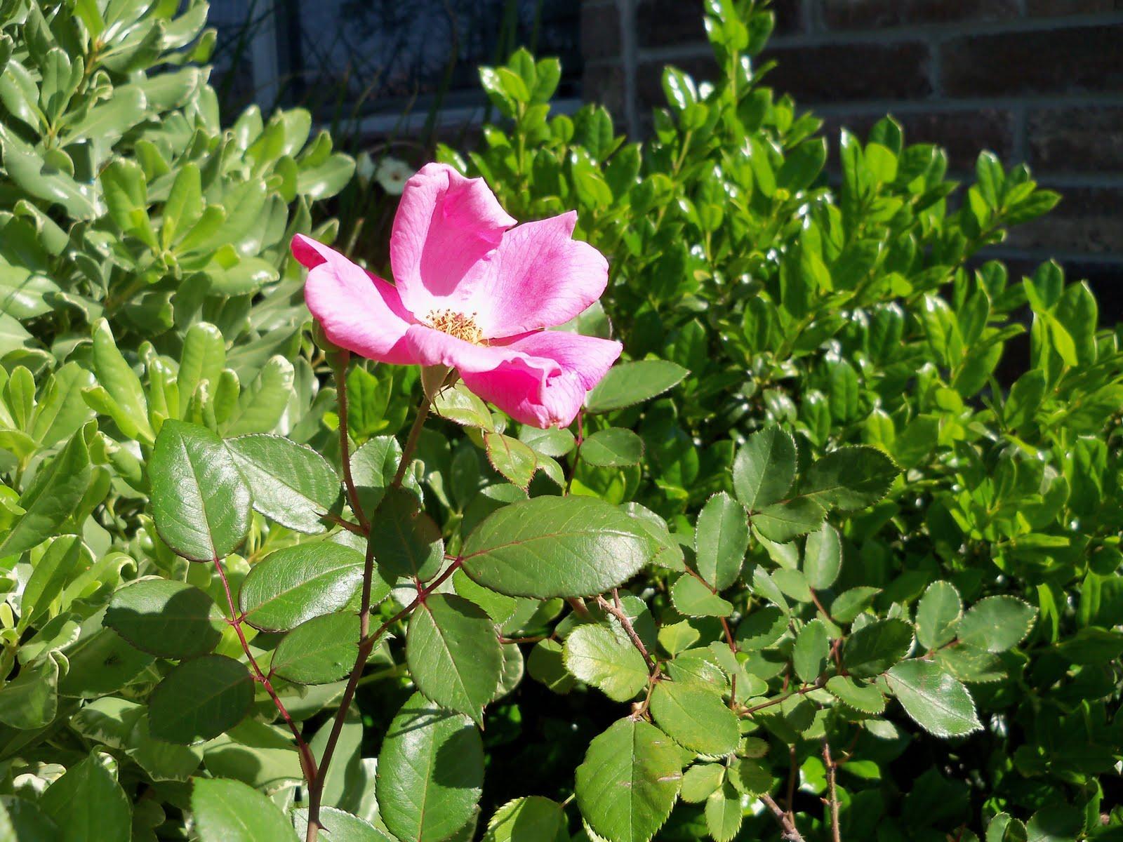 Gardening 2010 - 101_1369.JPG
