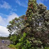 Hawaii 2013 - Best Story-Telling Photos - IMGP8608.JPG