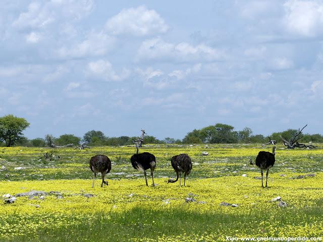 avestruces-namibia-ethosa.JPG