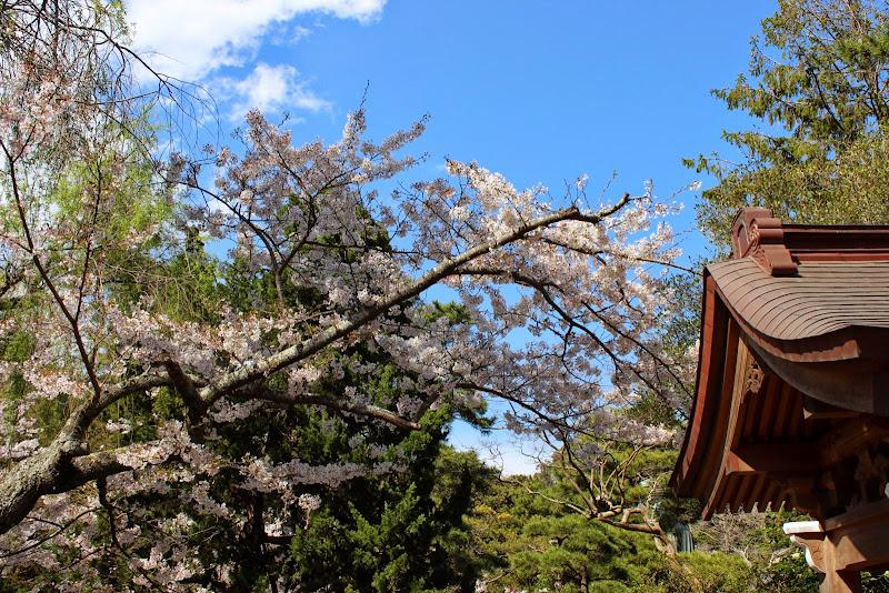 2014 Japan - Dag 7 - marjolein-IMG_0956-0601.JPG