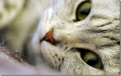1123cute-cats-wallpapers-background-16