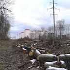 Вырубки ЛЭП в Воронежской Нагорной Дубраве 040.jpg