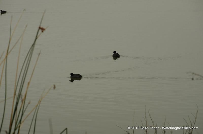 01-26-13 White Rock Lake - IMGP4308.JPG
