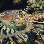 Big lobster @ Fishermen's hut