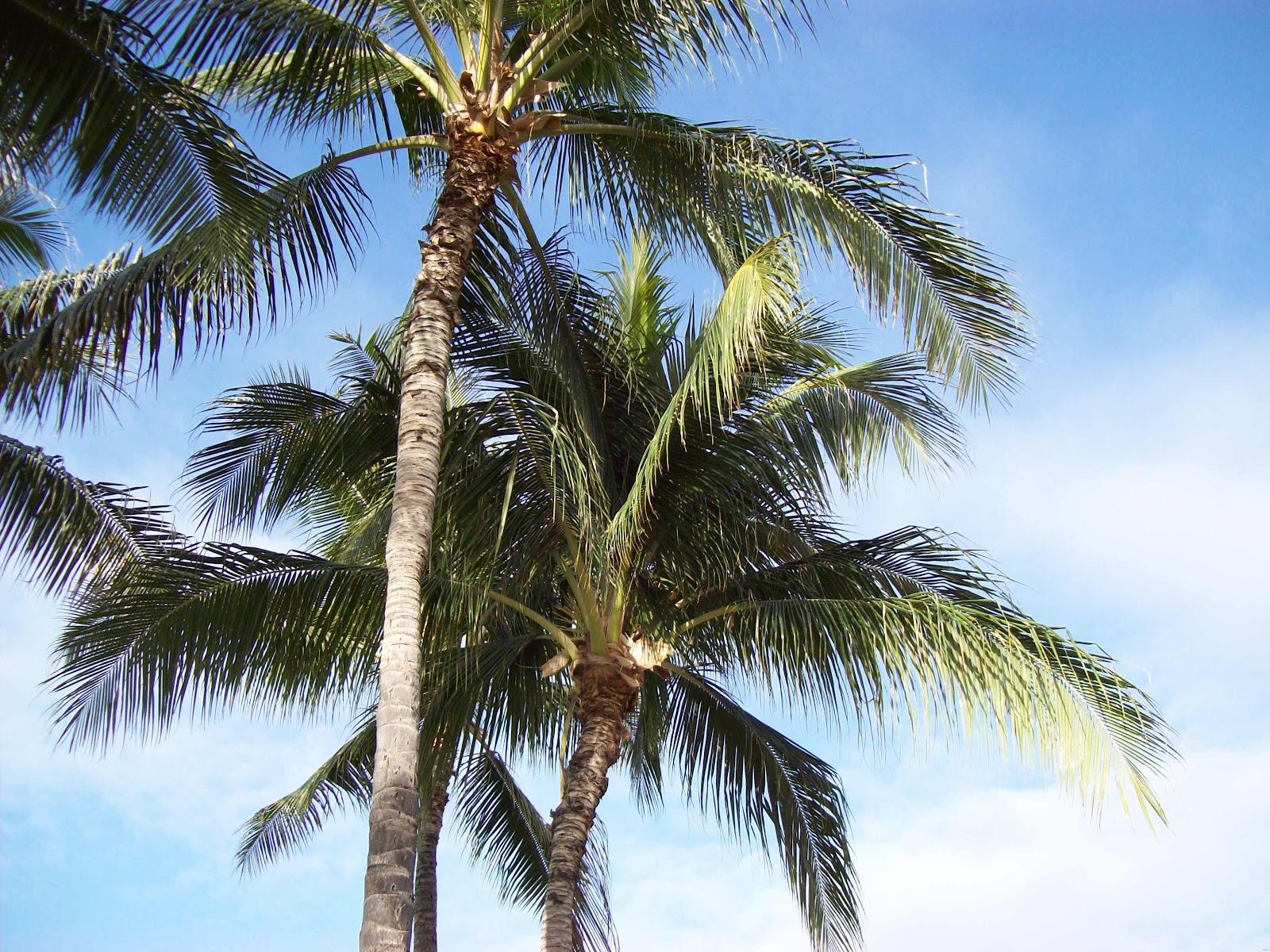 Hawaii Day 2 - 100_6494.JPG