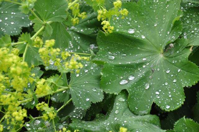 rainy day greenery in the flower garden