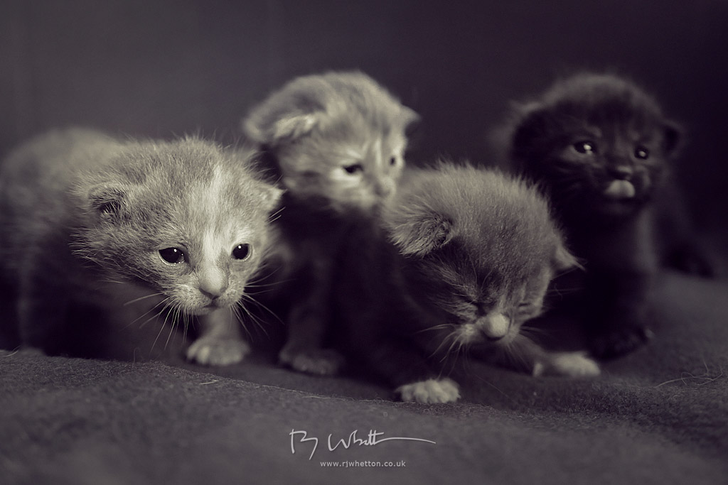 IMAGE: https://lh3.googleusercontent.com/-lAar4EZW6hg/U17rre8USLI/AAAAAAAAQRg/QQPFIBGjuFM/w1024-h683-no/Kittens+Apr+28+192236-04507D.jpg