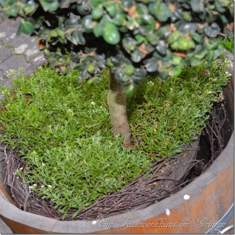 Kuebelpflanzen