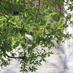 28.04.11 KOGEMUSTER ja muu melu - IMG_6248_filt.jpg