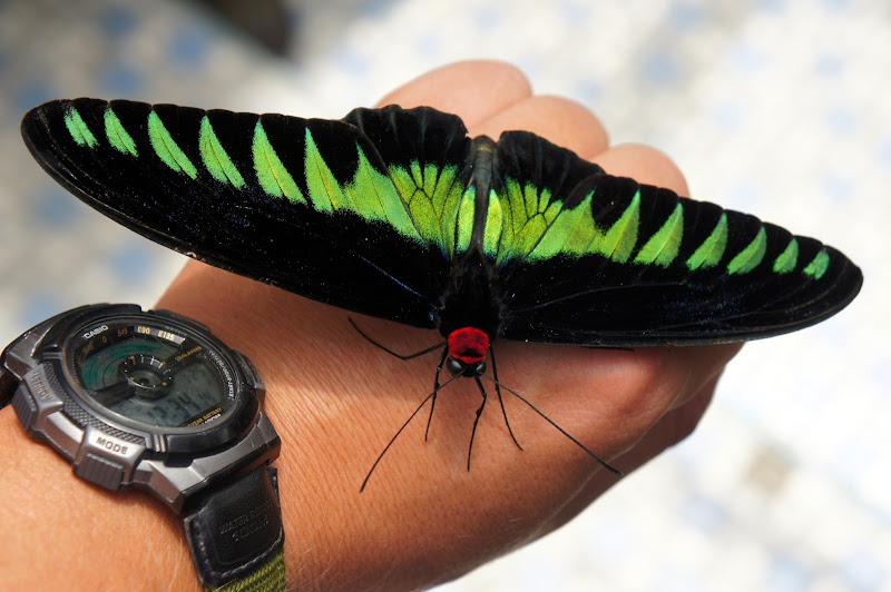 Schmetterling auf Torges Hand