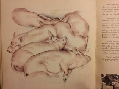 My Country Book by Tunnicliffe - illustration of sleeping pigs.