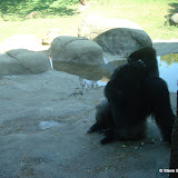 Pittsburgh Zoo Revisited - DSC05180.JPG