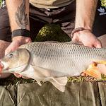 20160724_Fishing_Grushvytsia_011.jpg