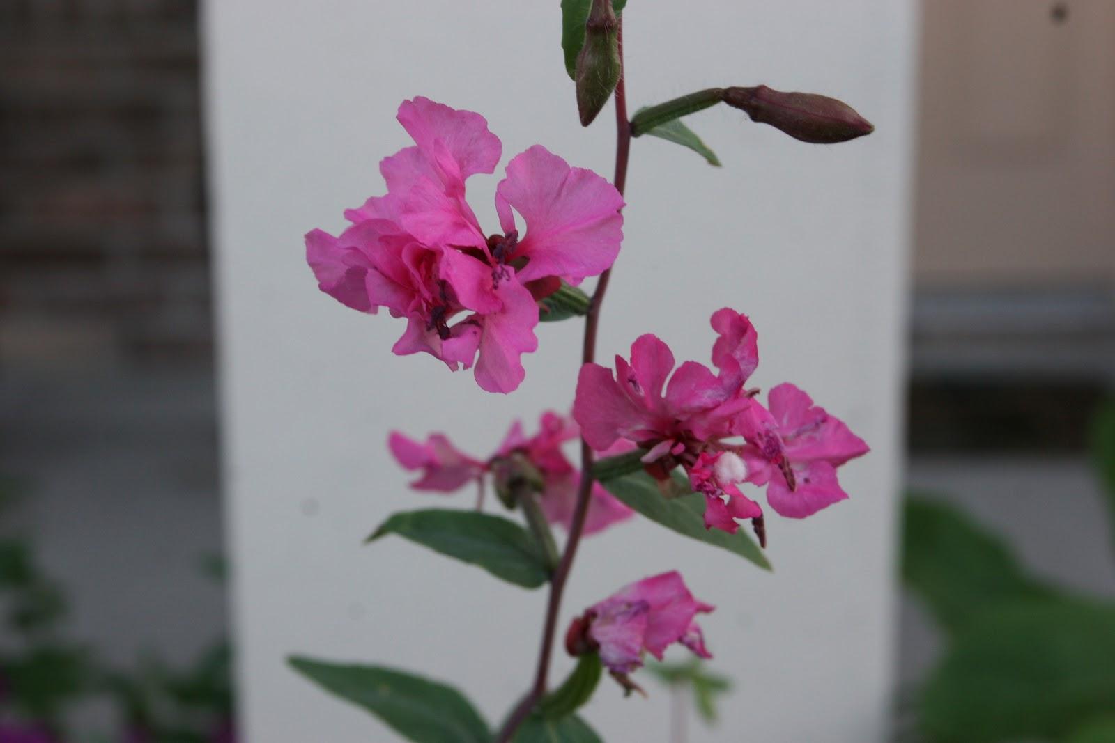 Gardening 2012 - IMG_2901.JPG