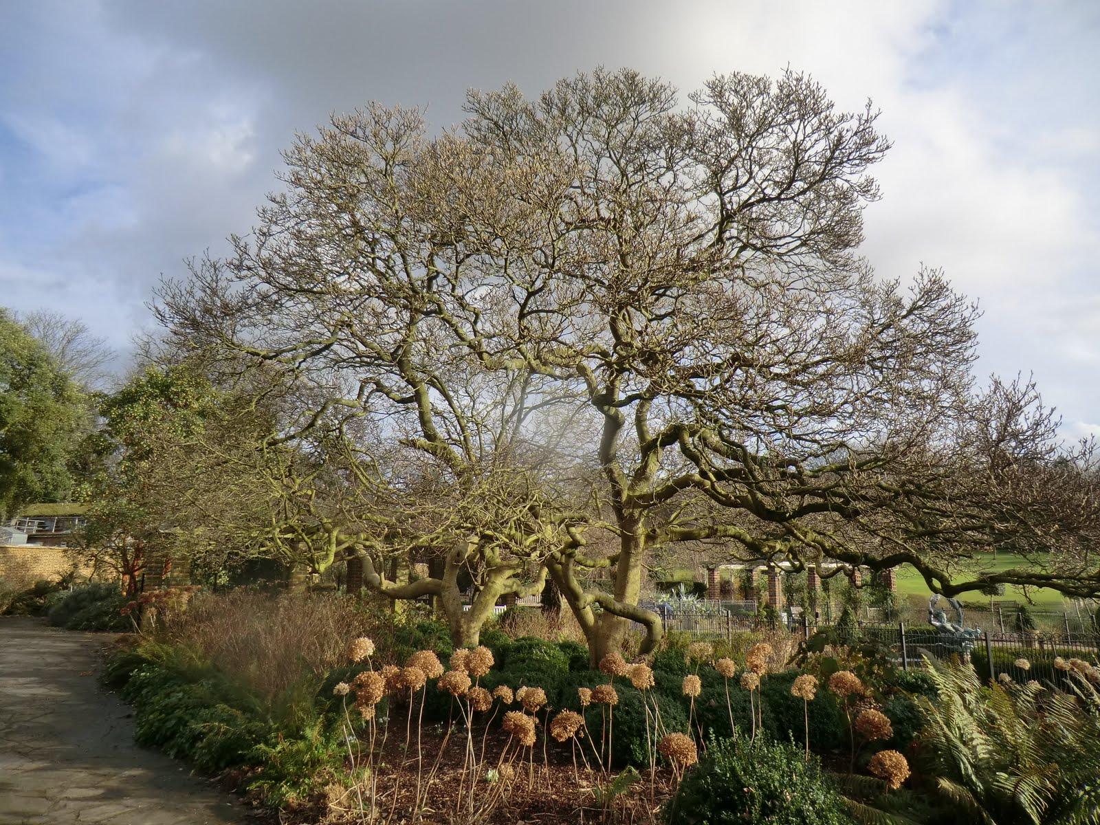 CIMG8973 Walled Garden, Golders Hill Park