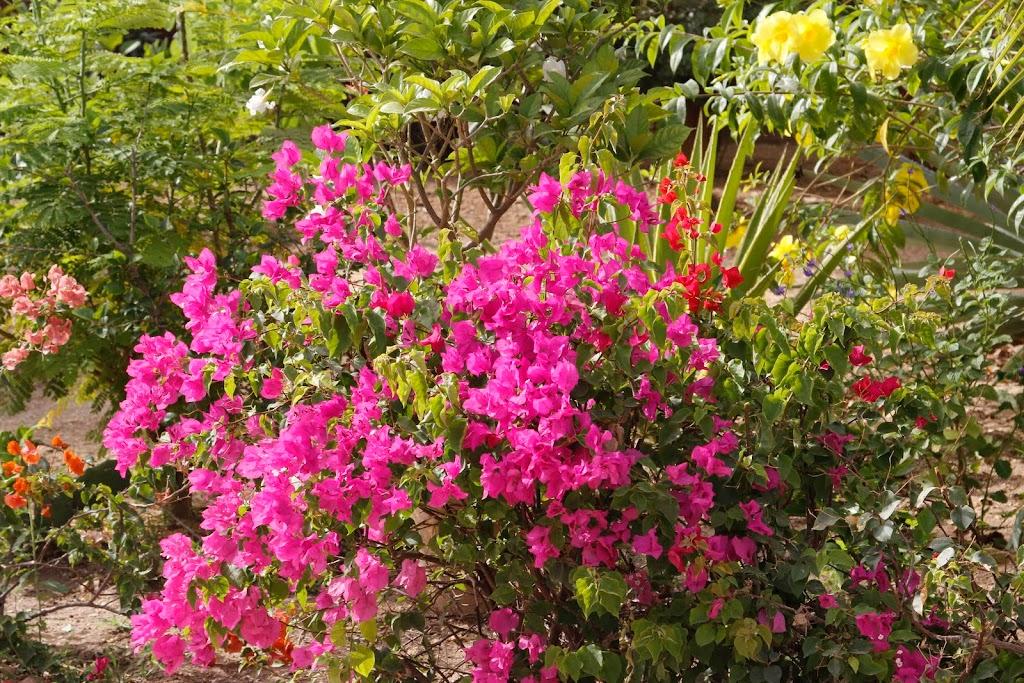 Mon jardin senegalais _MG_4816