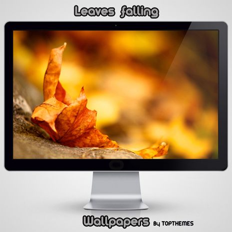 Leaves  falling Wallpapers,2560 X 1600<br />,1600 X 1200