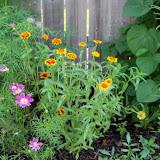Gardening 2010, Part Two - 101_3350.JPG