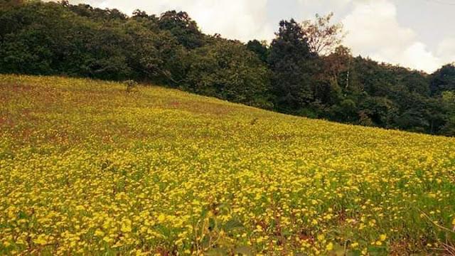 A Beautiful View of Nature at Damanjodi
