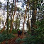 031-Nieuwjaarswandeling met de Bevers.Menno gidst ons door het mooie natuurgebied De Regte Heide te Go+»rle