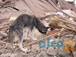 1era visita asistencia animales damnificados terremoto  Pisco 2007 (3)