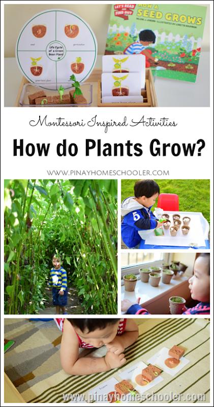 Plants Montessori