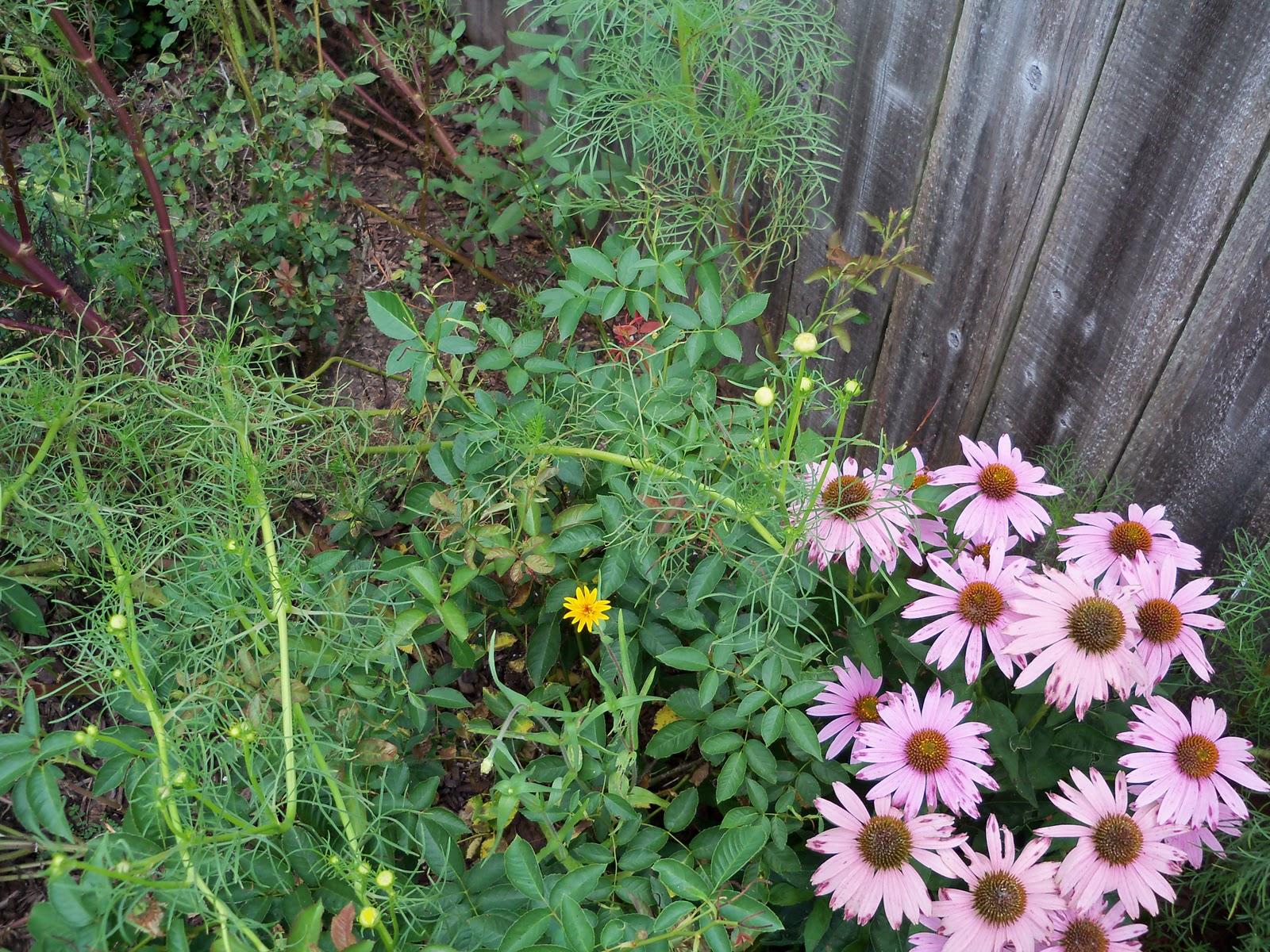 Gardening 2010, Part Three - 101_4827.JPG