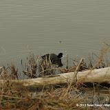 01-26-13 White Rock Lake - IMGP4343.JPG