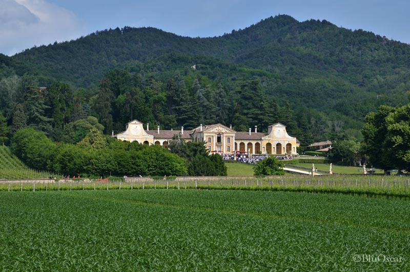Villa Maser mostra ciliegie 02