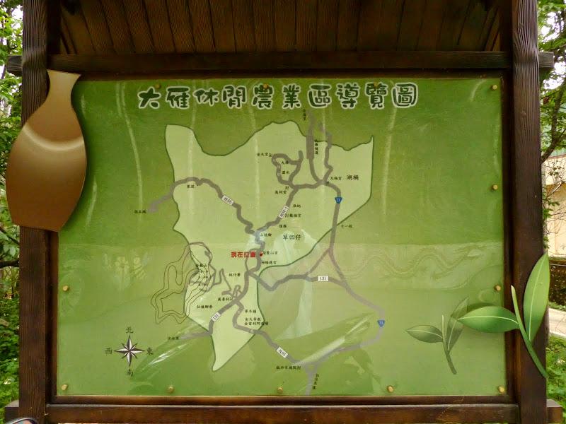 Puli, Nantou county, cueillette de thé - P1050611.JPG