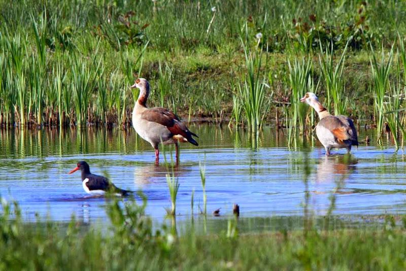 Vogels en dieren - IMG_6715.JPG