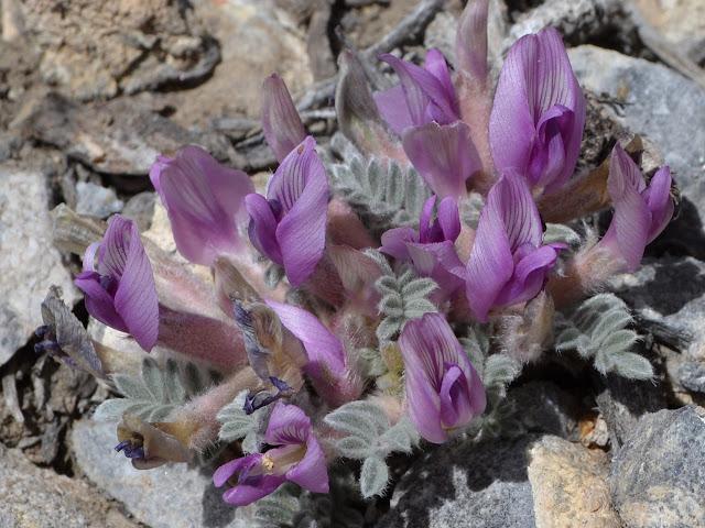 purple flowers like a vase
