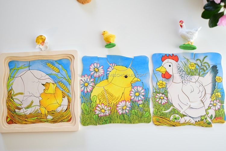 Introducing the Life Cycle of a Chicken to Preschoolers
