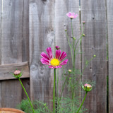 Gardening 2010 - 101_1575.JPG