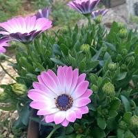 primavera-luminasioIMAG0204.jpg