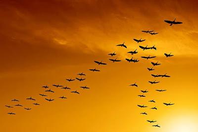 उड़ न सकने वाले पक्षियों में से पृथ्वी से विलुप्त हुए चार में से तीन पक्षी - anokhagyan.in