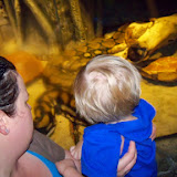 Downtown Aquarium - 116_3895.JPG