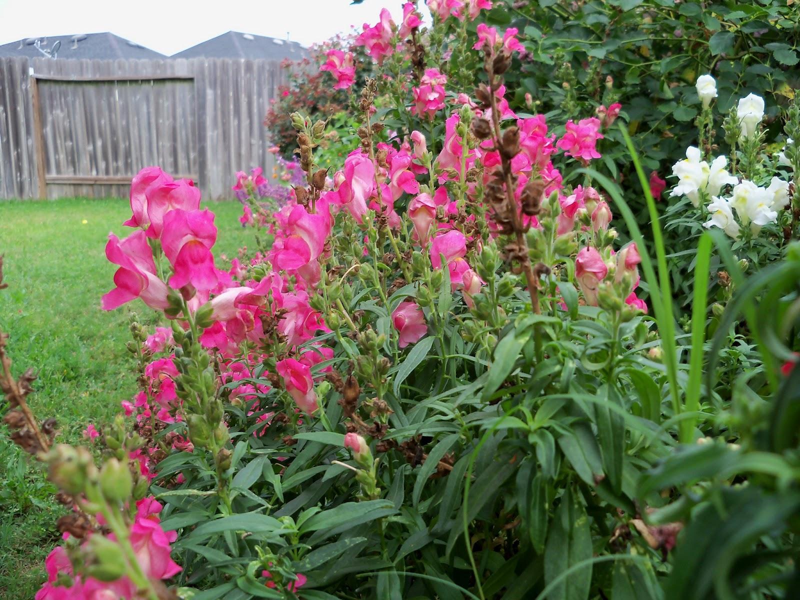 Gardening 2012 - 115_2005.JPG