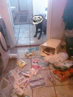 messy dog trollface, messy, messy dog, dog trollface, trollface, naughty dog, naughty dog trollface