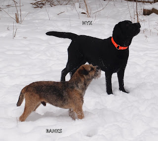 Lovin' the new fallen snow.  Banks and Nyx